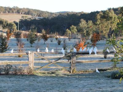 Ganymede Truffles Frosty trufferie with birds sitting on the fence