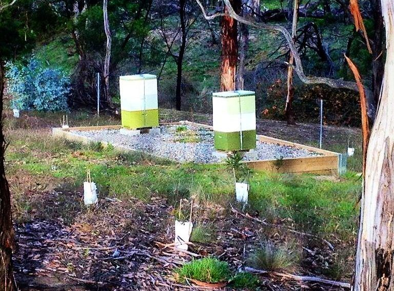 2 green and white bee hives in Australian bush setting