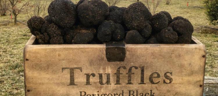truffle season
