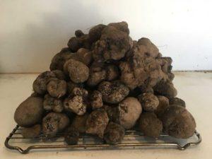 Truffles piled high on white background