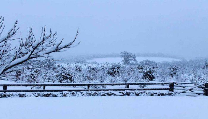 Snowy Truffiere in NSW