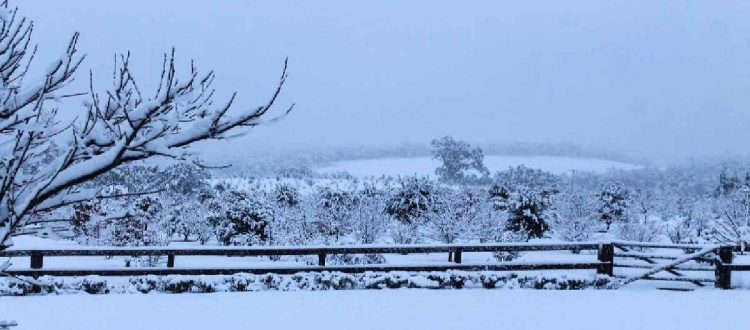 Snowy Truffiere in NSW